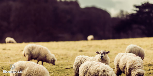 Giles Bracher shoots the Lamb at Hindon