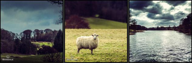 lamb 4